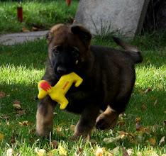 Photo: Drago