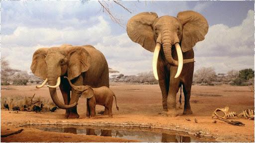 코끼리 배경