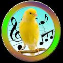 Talking Bird icon