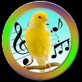 Canary Training
