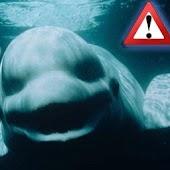 Blue Whale Games