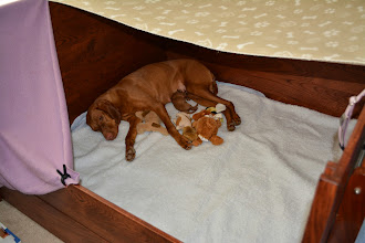 Photo: Lila is so tired and now her bed is clean and drafts blocked