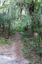Photo: the trail used to loop out to the perimeter track...