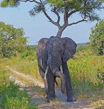 Photo: One tired elephant?