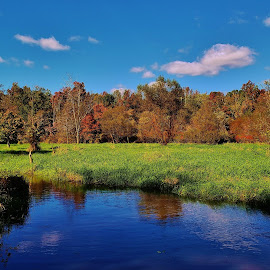 Patuxent Marsh Autumn Scene 2018 by Matthew Beziat - Landscapes Waterscapes ( wetlands, patuxent research refuge north tract, anne arundel county, fall, maryland, autumn, patuxent research refuge, marsh,  )