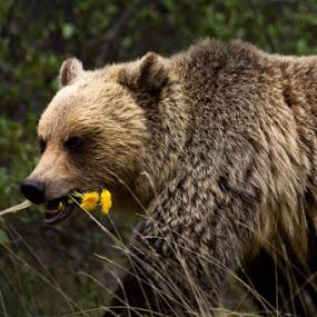 by Chris Greenwood - Animals Other Mammals