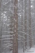 Photo: ... motive, ki jih riše narava, ...