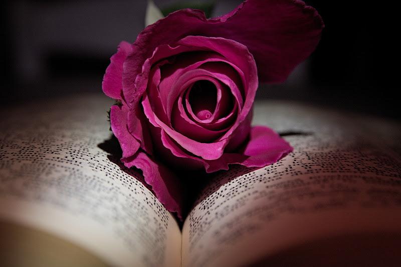 Riposava delicatamente su un letto di parole.... di ugofeca