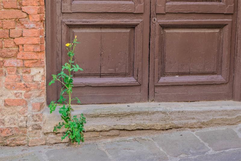 Fiore cittadino di AndreaCio