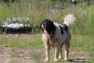 Photo: grumpy old dog