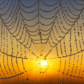 Rising Through The Center by Adrian Campfield - Nature Up Close Webs ( light blue, tangerine, vibrant, yellow, insects, sunrsie, droplets, macro, sky, nature, emerald, dark, terracotta, light, black, azure, orange, patterns, white, colours, dawn, turquoise, crimson, contrasts, warmth, lines, golden, vibrancy, sienna, sepia, scarlet, dew, vivid, wildlife, reflections, strings, curves, cobweb, grey, gold, abstract, water, spiders, green, silver, bubbles, peach, morning, red, blue, amber, pearls, cloud, dew drops,  )