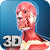 My Muscle Anatomy file APK for Gaming PC/PS3/PS4 Smart TV