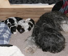 Photo: die drei und Mama liegen gern beieinander