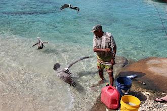 Photo: Pelícanos tratando de comer el pescado que tiene en la mano el pescador