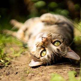 hanging out by Casey Bebernes - Animals - Cats Playing