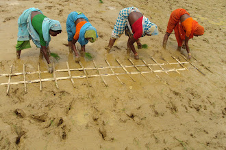 Photo: SRI markers invented by farmers.