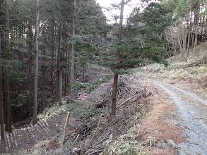 沢山の林道が分岐している