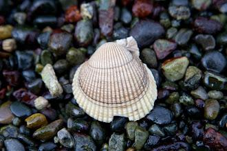 Photo: Still life shot on the beach.