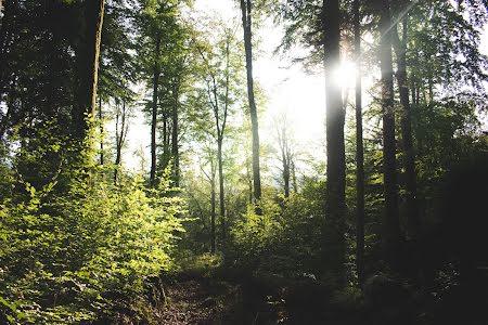 Boekhoudkantoor plant bos