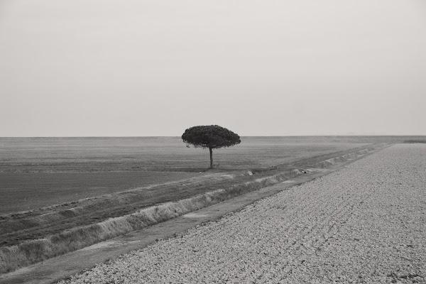 L'albero di Fotodiale