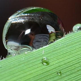 Image in water droplets by SHAMSOL BAHREN ABAS - Artistic Objects Other Objects