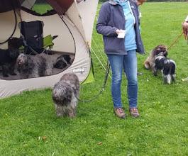 Photo: Hermine beschäftigt sich lieber mit Toffie als im Zelt zu sitzen