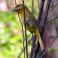 Aves de Cuenca Santa Inés, Zamorano, Honduras