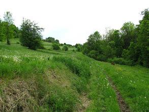 """Photo: 07.Szeroka droga szybko się kończy. Teraz jest już tylko na wpół zarośnięta ścieżka przez łąki i tak jak pisze D. Gacek w przewodniku """"Beskid Wyspowy"""" nie ma praktycznie żadnego oznakowania. Należy iść ścieżką wzdłuż głębokiego jaru, którym płynie potok (gęstwina po prawej)."""