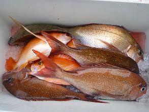 Photo: 釣果です。 タカオさんの釣果。