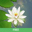 3D Lotus Pond Live Wallpaper Free icon