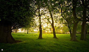 Photo: Dreams Glimmer  Just a sparkle between the boughs As the sun glitters its morning dance Just a glow upon spring green As the dew reflects the diamond dazzle These morns of gentle mist in distance And only birdsong to fill my soul I shall walk upon this carpet of life And watch as dreams glimmer arises To wake the earth To waken me.