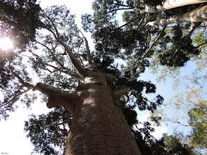 Photo: higher and higher  for #treetuesday (+Tree Tuesday) by // +Shannon S. Myers// +Christina Lawrie #plusphotoextract by // +Jarek Klimek #Asia  #SriLanka  #Kandy  #botanicalgardens  #sun  #backlight