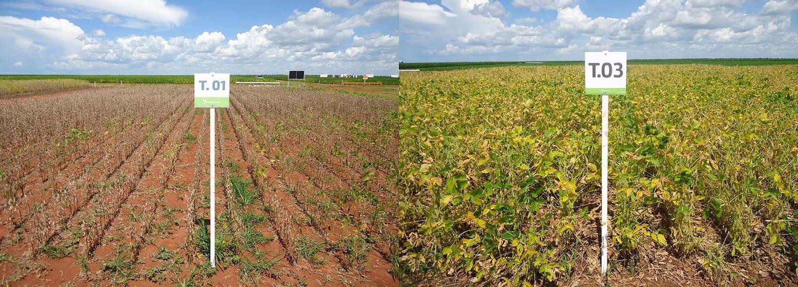 Comparativo entre uma amostra de solo biologicamente comprometido (à esquerda) e outra saudável (Fonte: Embrapa/Reprodução)