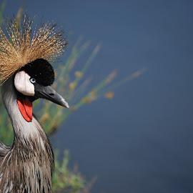 Pronk by Lana Kirstein - Animals Birds ( kleure vere snawel natuur gras )