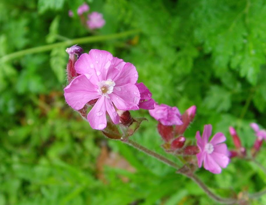 wild flower copy