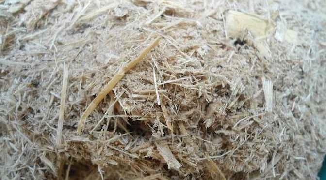 Kỹ thuật ủ bã mía làm thức ăn cho gia súc