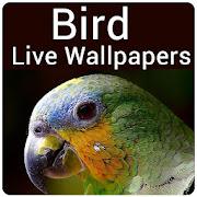 Bird Live Wallpaper - Cute Bird Wallpaper & Editor