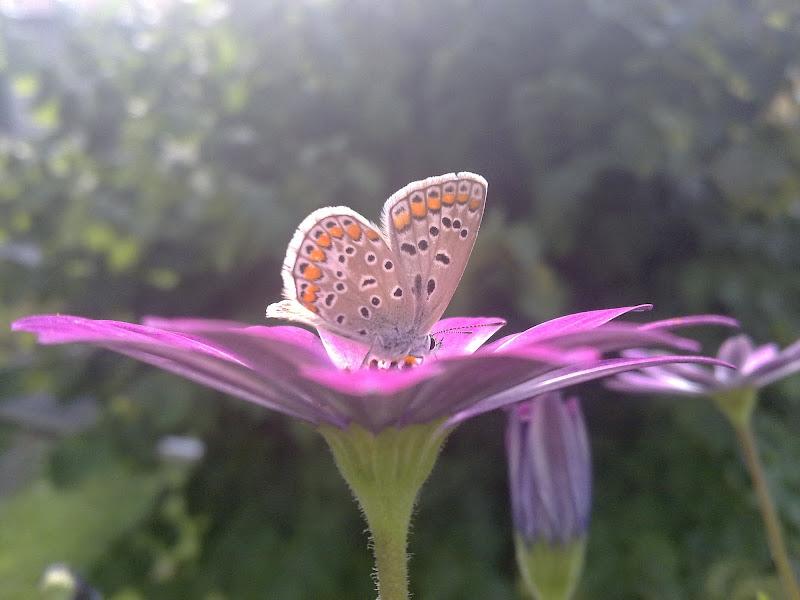 Farfalla1 di IBPhotos