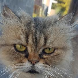 cat love by Fredarick Royson - Animals - Cats Portraits ( love, cat, ukraine, nature, natural )
