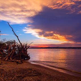 Lewis by Chris Timmerman - Landscapes Sunsets & Sunrises ( reflection, nature, sunset, lake, nebraska,  )