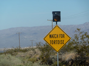 Photo: pas vu de tortue, seulement des traces dans le sable au bord de la route