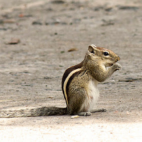 by Ranjani Bharath - Animals Other Mammals