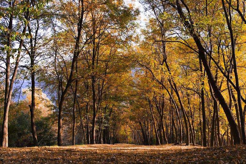 Sfumature d'autunno di andreabazzi_
