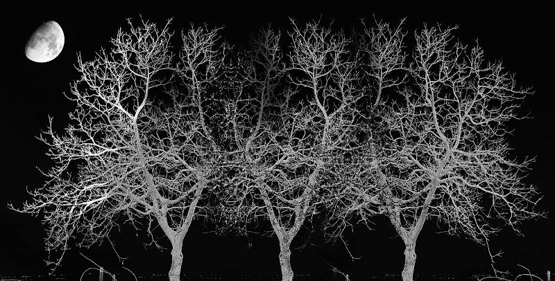 Alberi nella notte di Bibanto
