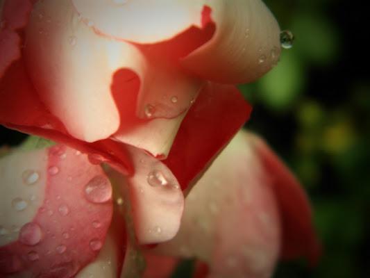 Rose d'autunno di SoleDiCartone