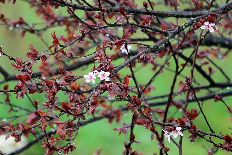 primavera bagnata di Stecchia