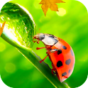 Ladybug Video Wallpaper HD icon