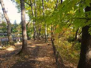Photo: 伐採が予定されている地域(玉川上水遊歩道)
