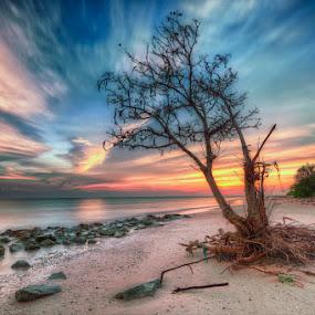 The Stranded Tree by SyaFiq Sha'Rani - Landscapes Sunsets & Sunrises ( tree, waterscape, blue hour, sunset, sun,  )