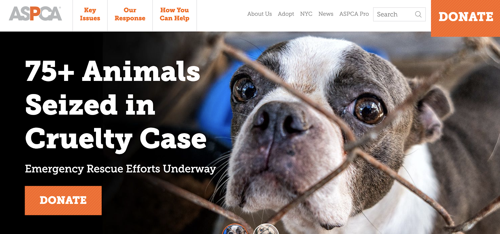 example of psychographic segmentation on ASPCA homepage.